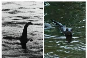 Image Gallery Nessie Sightings 2015