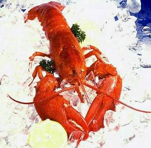Deep Sea FAQ, Why does a lobster turn red when cooked ...