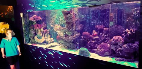 refurbishment   large marine aquarium  seasons