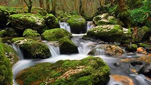 Nature, Stream, Of, Clear, Water, Flowing, Between, Rocks, Moss