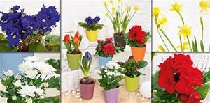 Blühende Zimmerpflanzen Pflegeleicht : bl hende zimmerpflanzen pictures to pin on pinterest ~ Michelbontemps.com Haus und Dekorationen