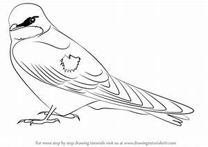 Learn How to Draw a Tree Swallow (Birds) Step by Step ...