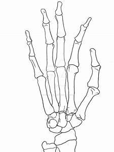Skeleton Hand Drawing Tutorial At Getdrawings