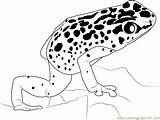 Frog Poison Dart Coloring Drawing Rainbow Sheets Printable Template Templates Popular Sketch Coloringpages101 Getdrawings sketch template