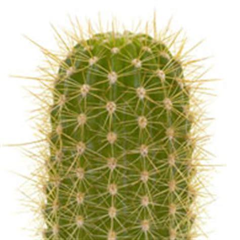 succulent plant symbolism meaning of cactus plants what do cactus mean