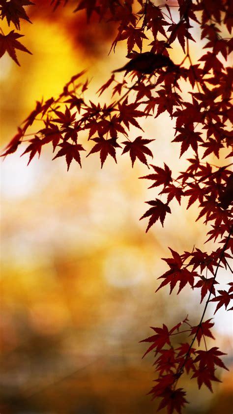 Beautiful Fall Leaves Iphone Wallpaper by Fall Leaves Iphone Wallpaper Hd