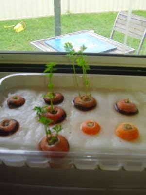 Growing Carrots  Gardening  Jardinage Maternelle, Maternelle, Sciences En Maternelle