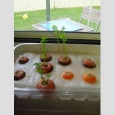 Growing Carrots  Gardening  Jardinage Maternelle, Maternelle, Sciences En Maternelle