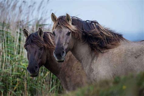 horse care horses konik natural equine nature true