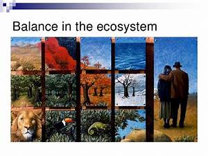 Chapter 22 Our Impact On The Ecosystem Lesson 1