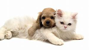 Adorable Cat and Dog Wallpaper | Wallpapers Green Cat Cute ...