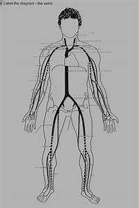 Grownkoski Blog  Arteries And Veins Diagram