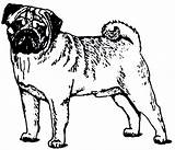 Pug Coloring Clip Clipart Puppy Dog Pages Outline Cliparts Printable Sheets Cartoon Boxer Christmas Dogs Library Poop Popular Getcoloringpages Clipartmag sketch template