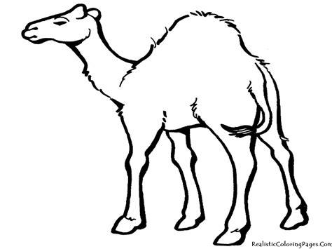 cartoon desert animals clipartsco