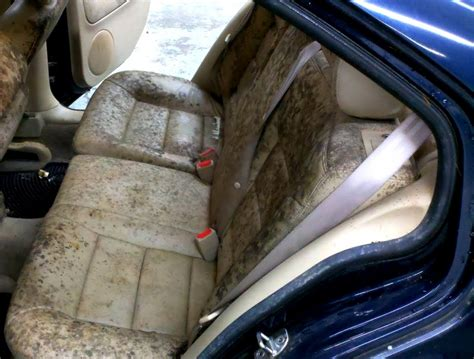 treat  prevent mold  mildew  home  cars