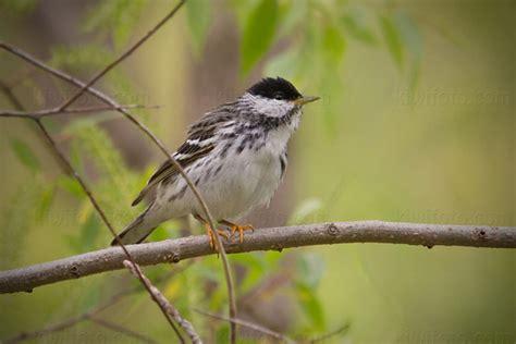 ohio pictures   photography bird wildlife