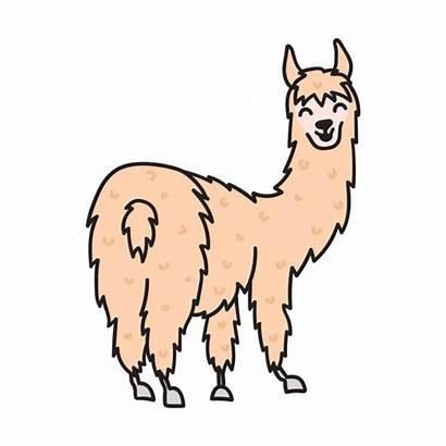 Lama Cartoon Llama Vicuna Drawing Alpaca Vector
