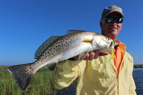 How To Catch Big Speckled Trout