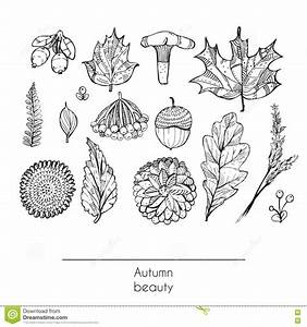 Hand Drawn Autumn Beautiful Set Of Leaves, Flowers ...