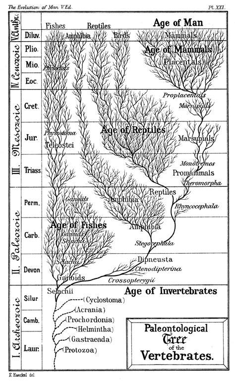 Timeline Of Human Evolution Wikipedia
