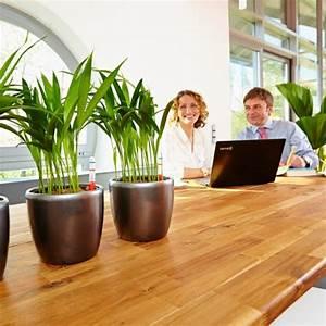 Büro Pflanzen Pflegeleicht : zimmerpflanzen seite 2 das gr ne medienhaus ~ Michelbontemps.com Haus und Dekorationen