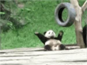 The popular Sad Panda GIFs everyone's sharing