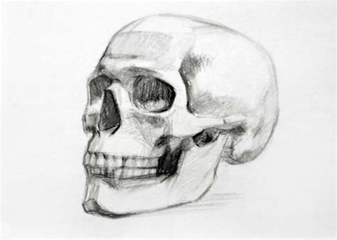 View Anatomic Skull Google Search References
