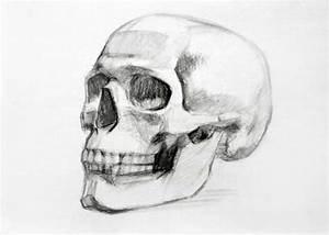 3  4 View Anatomic Skull