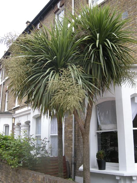 Small Trees For Garden by Cordyline Australis Landscape Architect S Pages