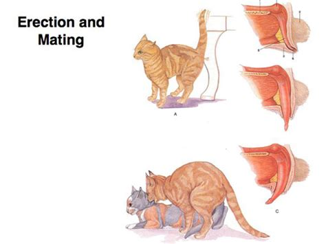 lecture  dog  cat reproduction