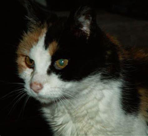 calico names cat names calico page 2 female cat names calico page 3 female cat images frompo
