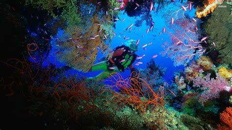 scuba diving wallpaper high resolution  images
