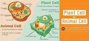 Difference Between Plant And Animal Cells