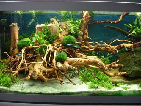 Aquascaping Forum by Aquascaping Galerie Aquascaping Forum Ideas For