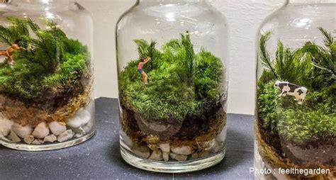 สวนขวดแก้ว ทางเลือกสำหรับผู้ที่ต้องการมีสวนเล็กๆไว้ในบ้าน ...