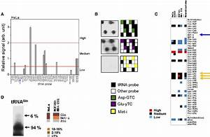 Profiling M 1 A58 Hypomodification In Human Cell Lines