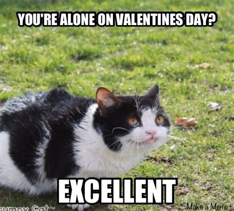 Pet Insurance Meme - 92 best images about pokey grumpy cat s bro on pinterest cats nothing more and tartar sauce