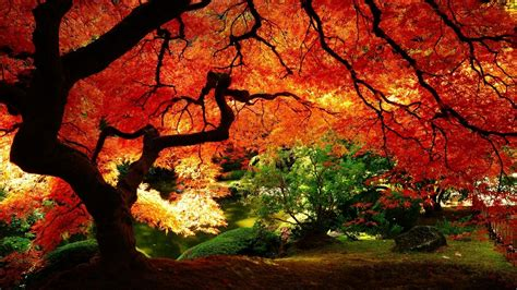 Tree In Autumn Colors Wallpapers