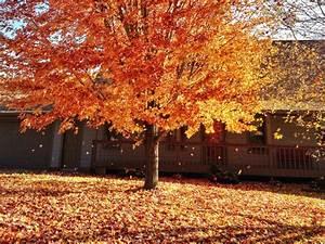 Tabulous, Design, 7, Fall, Leaf, Decorating, Ideas