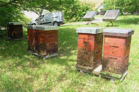 bienenvolk kaufen carnica bienenvolk imkerei heiser