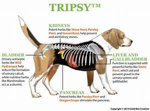 TRIPSY for kidney disease in dogs