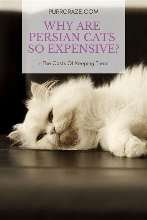 persian cats expensive why tweet