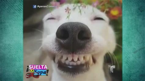 los animales mas tiernos en internet video telemundo