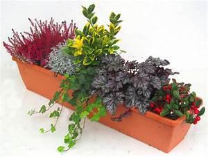 Kübel Bepflanzen Ideen : die besten 25 blumenk sten bepflanzen ideen auf pinterest gartenbepflanzung blumenturm und ~ Buech-reservation.com Haus und Dekorationen
