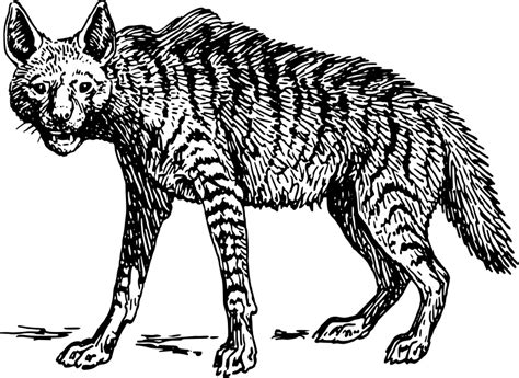 Free Hyena Coloring Pages