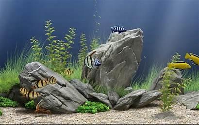 Aquarium Bergerak Untuk Dream Screensaver Windows Ikan