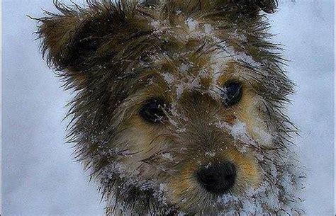 animal cruelty   reported  freezing weather