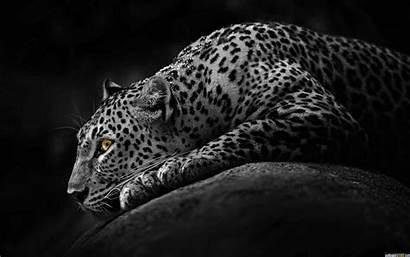 Windows Dark Wallpapers 1080p Wallpapersafari Seven Jaguar
