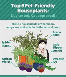 cat safe plants houseplants safe for cats and dogs fix