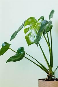 Indoor, Plants, That, Even, The, Worst, Gardeners, Could, Keep, Alive